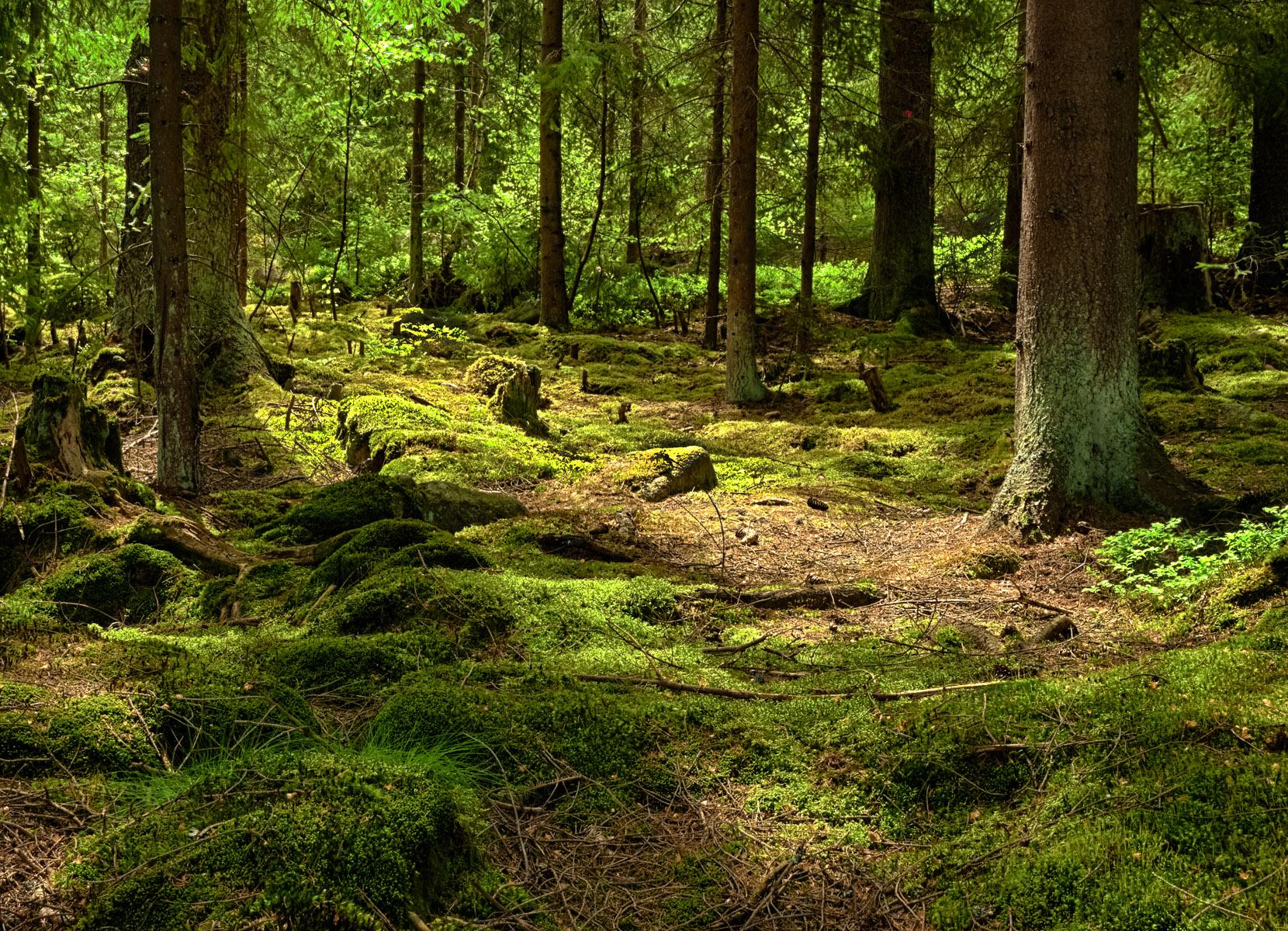 Den Waldboden Erkunden Umweltberatung Luzern